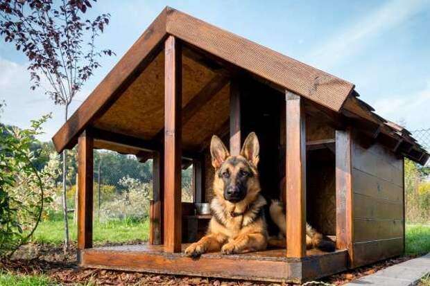 Красивая собачья будка - 3