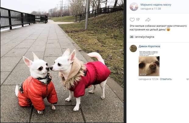 Фото дня: маленькие собачки из Марьина на прогулке