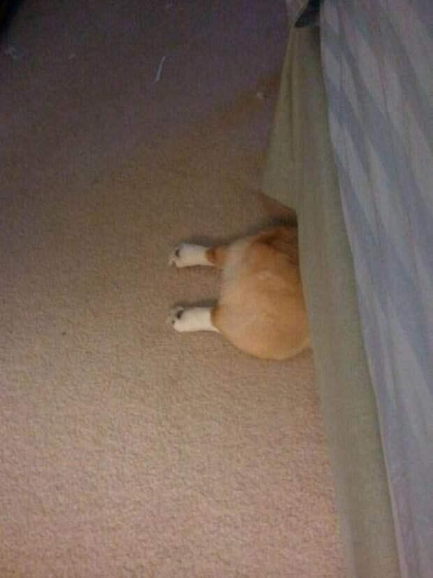 Собачки которые очень хотели спрятаться-19