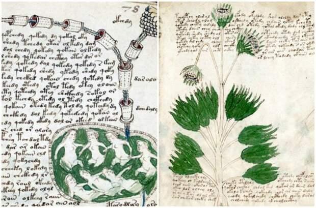 Рукопись Войнича артефакты, древность, загадка, интересное, история, находка