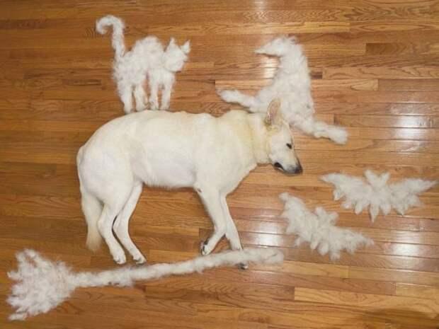 Лишняя шерсть на собаке