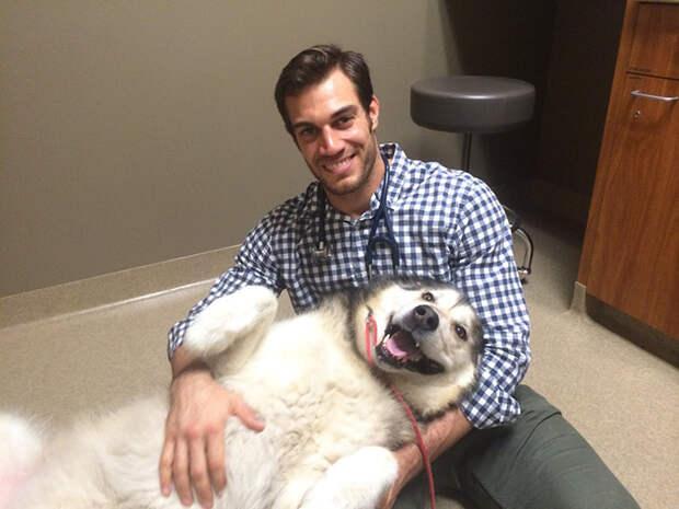 7.  ветеринар, красавец, мужчина