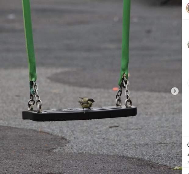 Фото дня: птенцы «захватили» детские качели