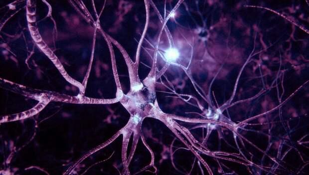 Учёные разработали искусственную нервную систему, реагирующую на свет
