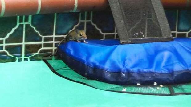 Это изобретение спасает жизнь мелким животным, упавшим в бассейн