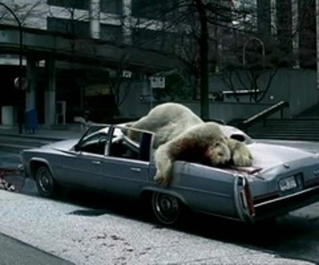 Кровавая бомбардировка белыми медведями