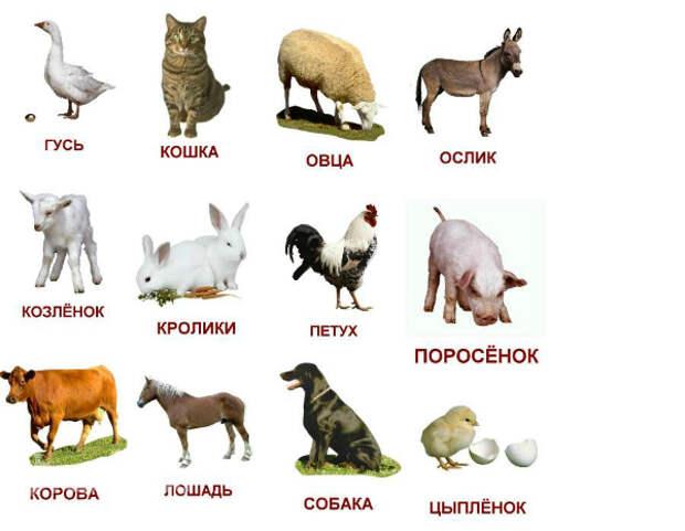 http://img3.imgbb.ru/3/9/2/392d0f2e44e469cae25188137c03d997.jpg