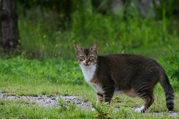 Почему у некоторых кошек висит дряблый животик? Это ожирение или что-то еще?