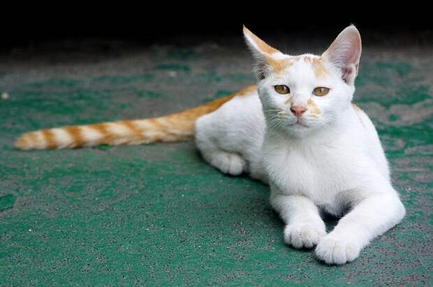 Дембель возвращался домой и увидел на автобусной остановке жалкого замёрзшего кота. Домой они приехали уже вдвоём