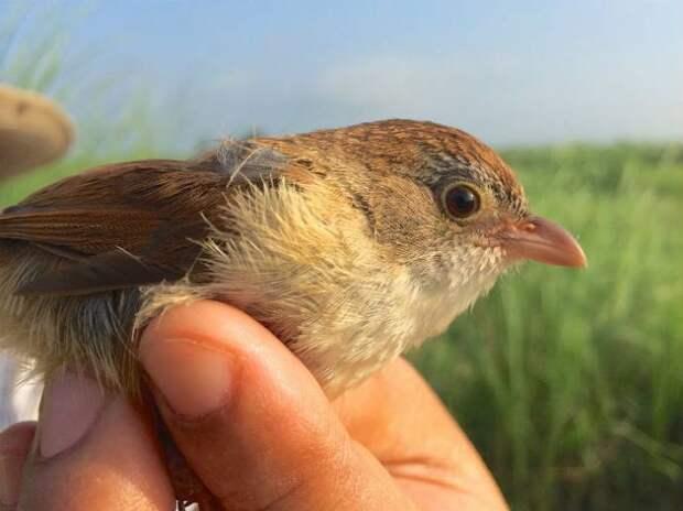 Считавшаяся вымершей птица найдена в Мьянме