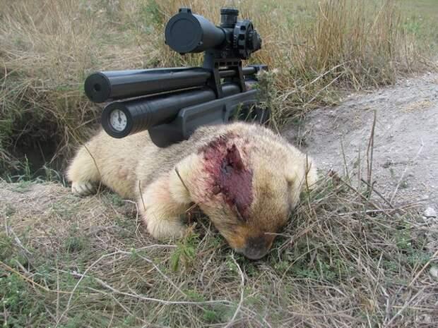Ничто не может оправдать убийство зверей, забавы ради!