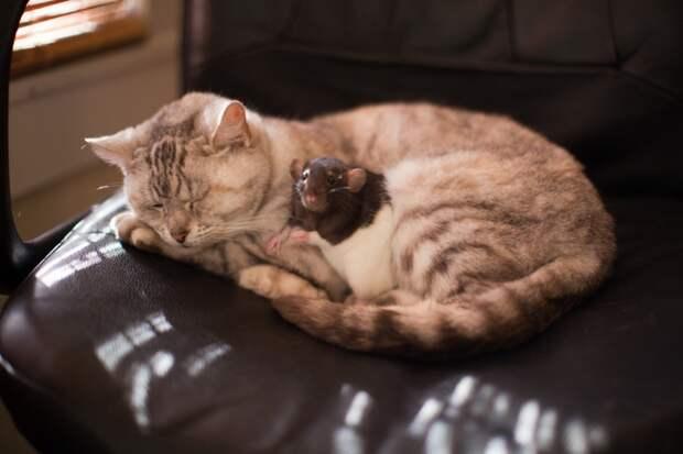 Котики и все-все-все
