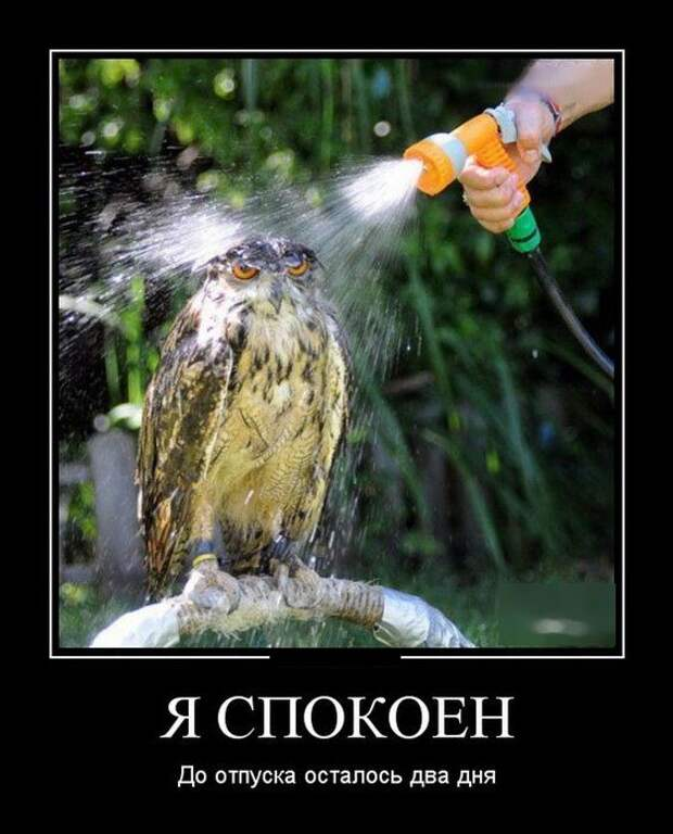 Свежие и веселые демотиваторы для пятничного настроения (10 фото)