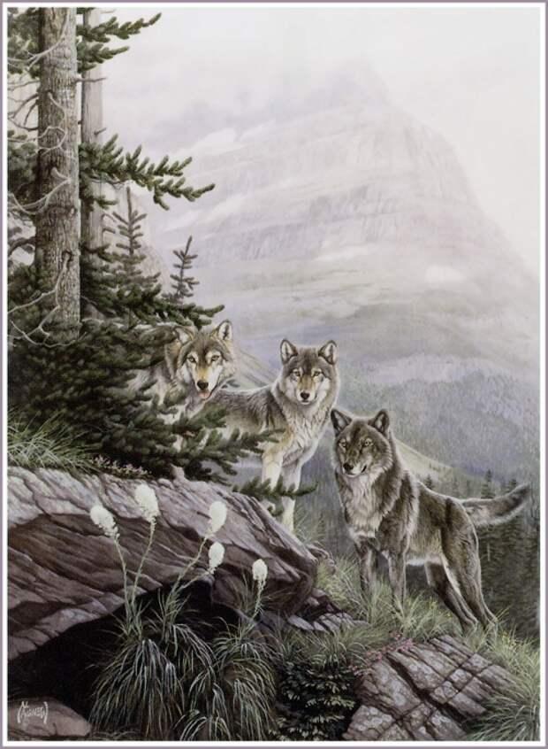 Эл Агнью: вдохновляющие картины волков