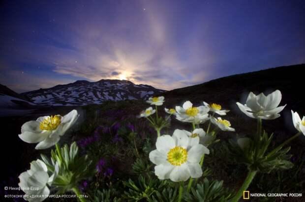 Лучшие снимки дикой природы России по версии National Geographic