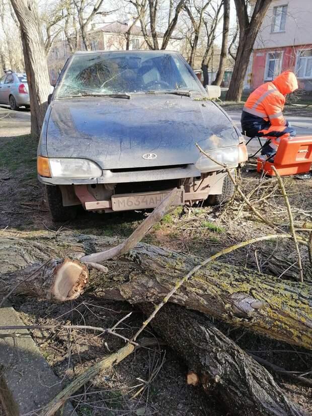В Керчи из-за сильного ветра повалились деревья. Люди в домах остались без интернета
