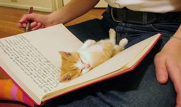 7. Диван-книжка? котенок, сон