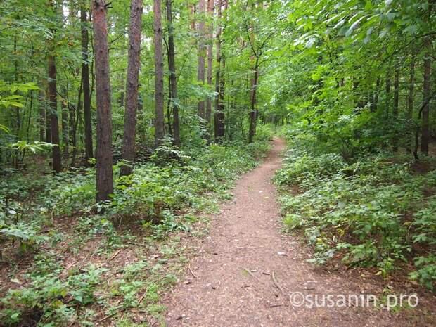 В лесах Удмуртии дополнительно разложат вакцину от бешенства животных