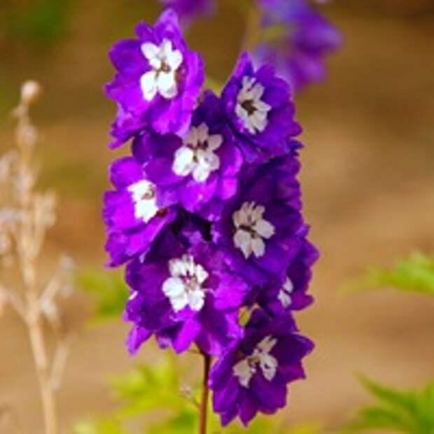 Оформление рабаток — фото, цветы для рабаток