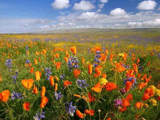 Цветковые (покрытосеменные) растения. Общая характеристика