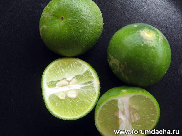 Лайм, лима, зелёный лимон, зеленый лимон, фото лайма, лайм фото, лайм в картинках