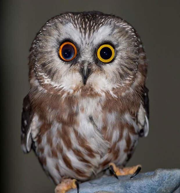 different-eye-color-heterochromia-17__700