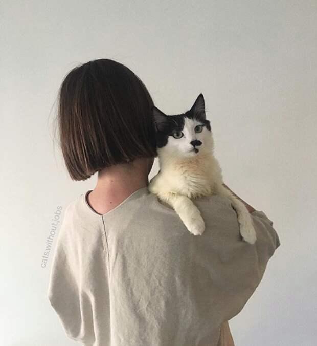 «Он подвинулся ближе и хрипло мяукнул…» А просьба котёнка-то исполнилась!