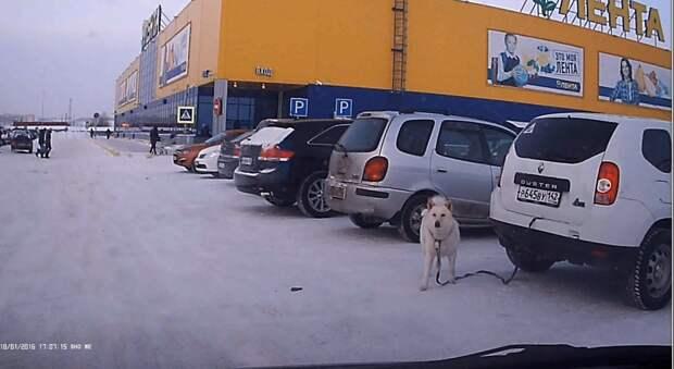 """В Новокузнецке заметили """"собаку-автосигнализаку"""""""