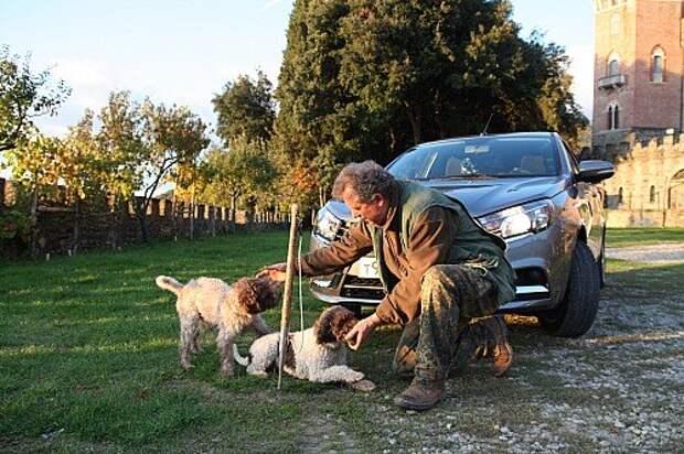 Собаки для поиска трюфелей позируют на фоне «Весты»