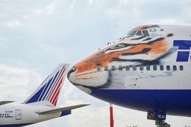 «Трансаэро» обзавелась летающим тигром