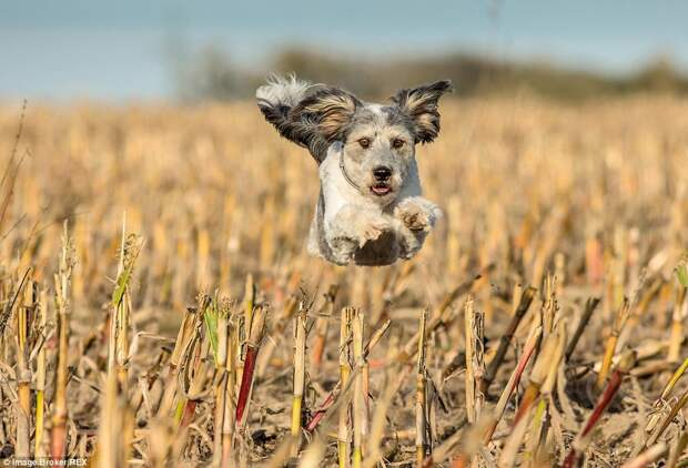 Собаки бросили вызов гравитации в серии забавных фотографий