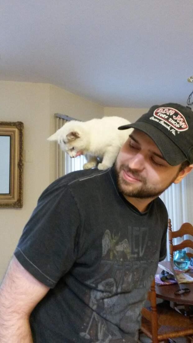 Трогательная история спасения брошенного котенка