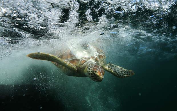 Зеленая морская черепаха в зоопарке Таронга, Сидней. животные, жизнь, позитив, эмоции