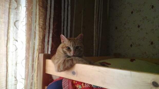 Это Боцман. Его и 3-х котят утопили работники котельной сразу после рождения...
