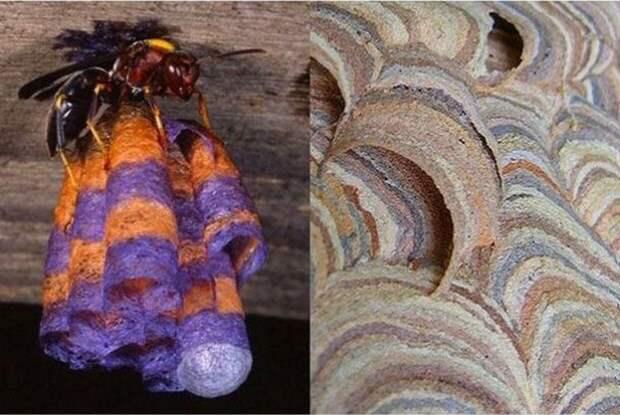 Гнездо бумажной осы животные, факты