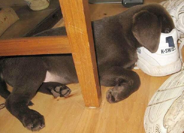 22 песика, которые могут спать где угодно и когда угодно!