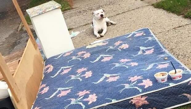 Люди переехали и оставили собаку, как мусор. Преданный пёс ждал возвращения хозяев...