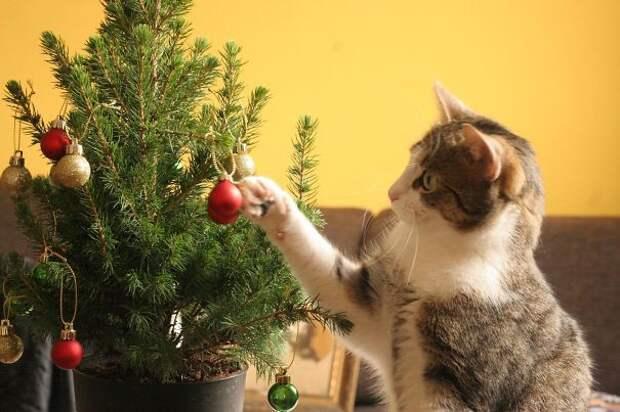 41. Просто любит украшать елка, кошка, подборка