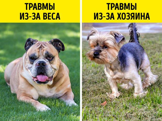 Покажите собаку ветеринару, если заметите эти 12 симптомов