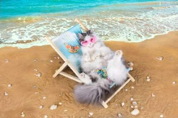 35 обалденных котов, которые умеют правильно отдыхать