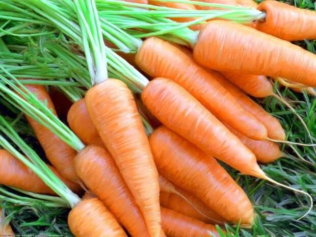 Морковь — это просто!
