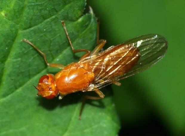 Как защитить свой огород от морковной мухи, устойчивые сорта