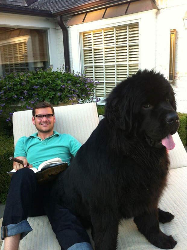 41. 70-килограммовый питомец  размер, собака