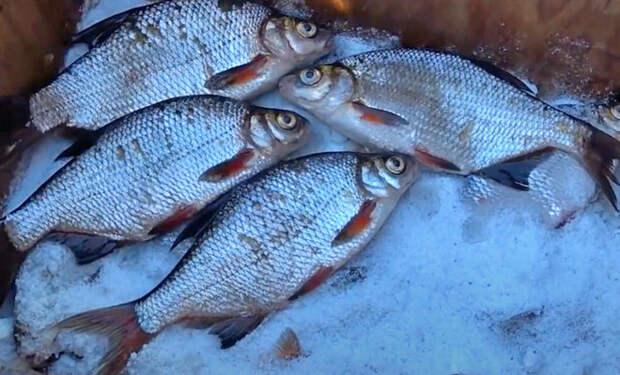 Сухой посол рыбы: кладем в ящик и засыпаем солью