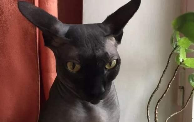 Россиянка сдаёт в аренду кота-собутыльника