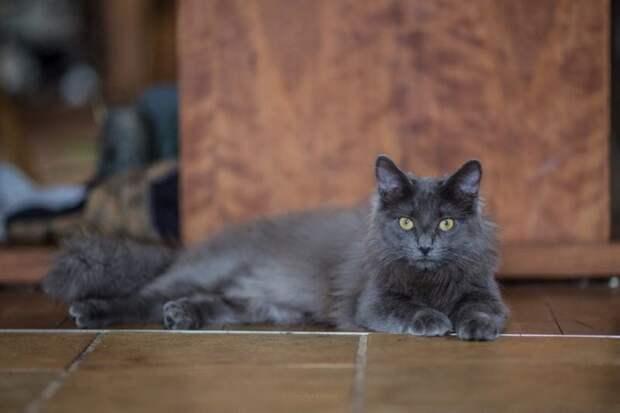 Как худющий скелетик превратился в роскошного кота Барли