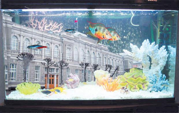 Губернаторский аквариум скоро почистят