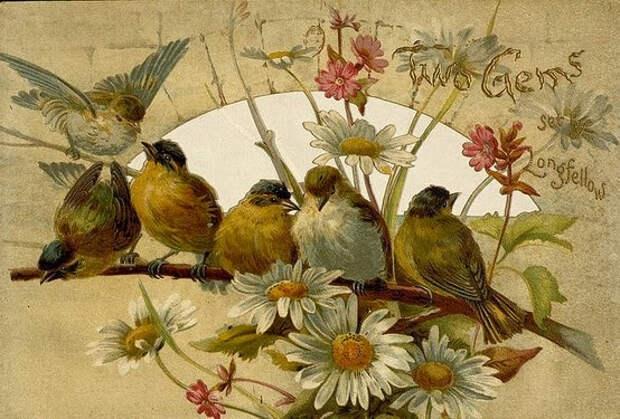 birds on a branch (554x375, 262Kb)