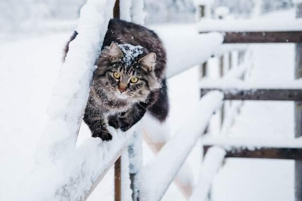 Аномальные холода ожидаются на большей части территории России