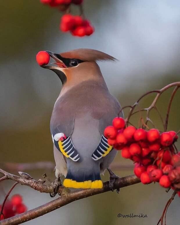 30 необычайно красивых птиц, о которых вы, возможно, не слышали